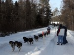 Open Class Sled Dog Team (14 miles)