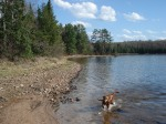 Copper retrieving a stick from the chilly Big Donahue Lake waters.