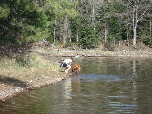 Teddy greeting a student on the shore of Big Donahue Lake.