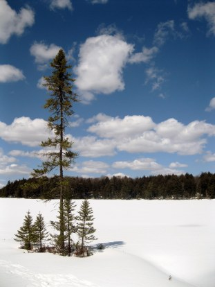 A lone spruce tree by the edge of the lake - inspiration for Jaimeson.