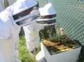 Learning about beekeeping