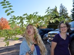 Becky and Kaya cut into invasive species