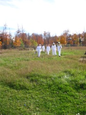 Beekeeping in the fall