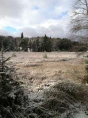 Snow dusts our bog