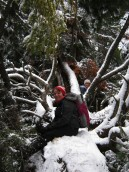 Sarah and Michelle take in the wonder of a massive fallen hemlock.