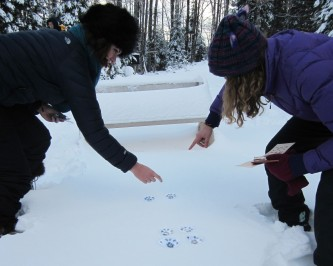 Allie and Olivia making the gait pattern of a fox
