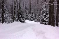 Winter Landscape from Selena Wilkinson