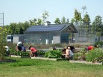 Campus gardens with solar array