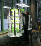 Harvesting the Tower Gardens