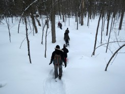Snowshoeing through the wilderness