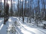 Birch Hillside ~ Nate Martineau