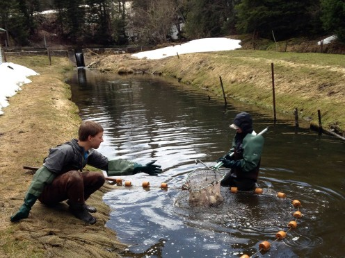 Doing service work at the fish hatchery