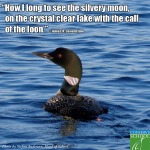 13-09-06 call of the loon