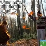 13-11-01 Falling Leaves
