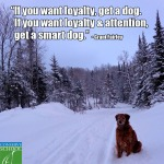 14-01-11 Loyalty Dog Quote