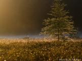 14-08-25 fog bog by Faulkner