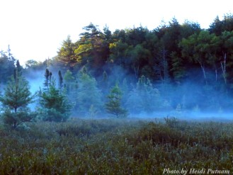 14-08-25 fog bog by Putnam