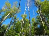 14-08-25 Trees by Putnam