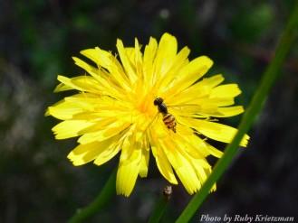 14-08-28 Yellow Flower by Krietzman
