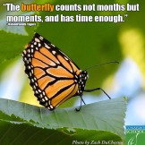 14-08-30 the butterfly counts not