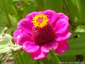 14-08-31 cool flower by Simmons