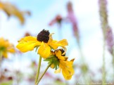 14-08-31 Yellow flower by Luedke