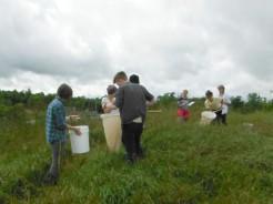 Capturing grass hoppers