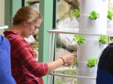 Working with the Tower Gardens