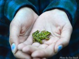 14-09-05 frog in hands by Stack