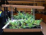 Growing native plants for placement on campus