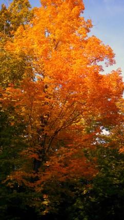 14-09-20 Autumn Color 10