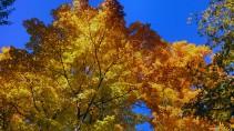 14-09-20 Autumn Color 11
