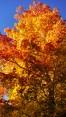 14-09-20 Autumn Color 12