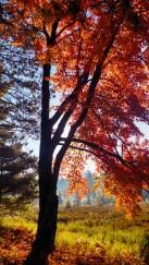 14-09-20 Autumn Color 15