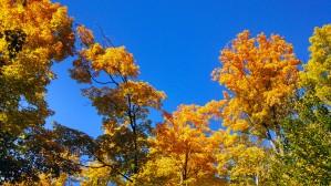 14-09-20 Autumn Color 5
