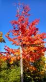 14-09-20 Autumn Color 6