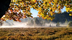 Bog fog