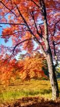 14-09-26 Autumn Color 16
