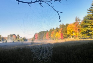 Morning fog on the causeway bog, seen through a spider web