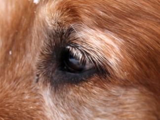 Copper closeup by Lena