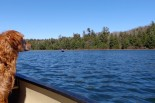 Copper looking out over Loon Lake