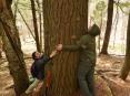 A big Sylvania tree hug