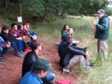 Learning about Forest Elicitation