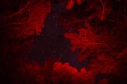 Night sky (photo by Bram)