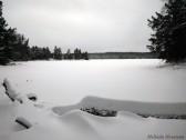 16-02-03 Sylvania Snowshoe 14 Loon