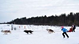 16-02-06 3Bear Start 03 from Houtman racing the sled