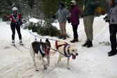 16-02-06 Nakayama 04 ski
