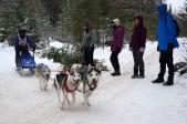 16-02-06 Nakayama 07 4 dog purebred