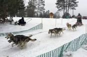 16-02-07 3Bear 10dog 06 Racer 27