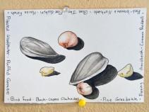 16-03-02 Drawn to Nature Bird Seed